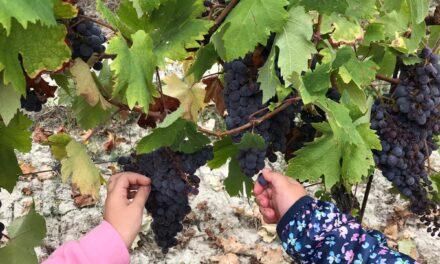 I bambini… e l'uva